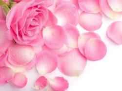 rosas-para-tu-camino